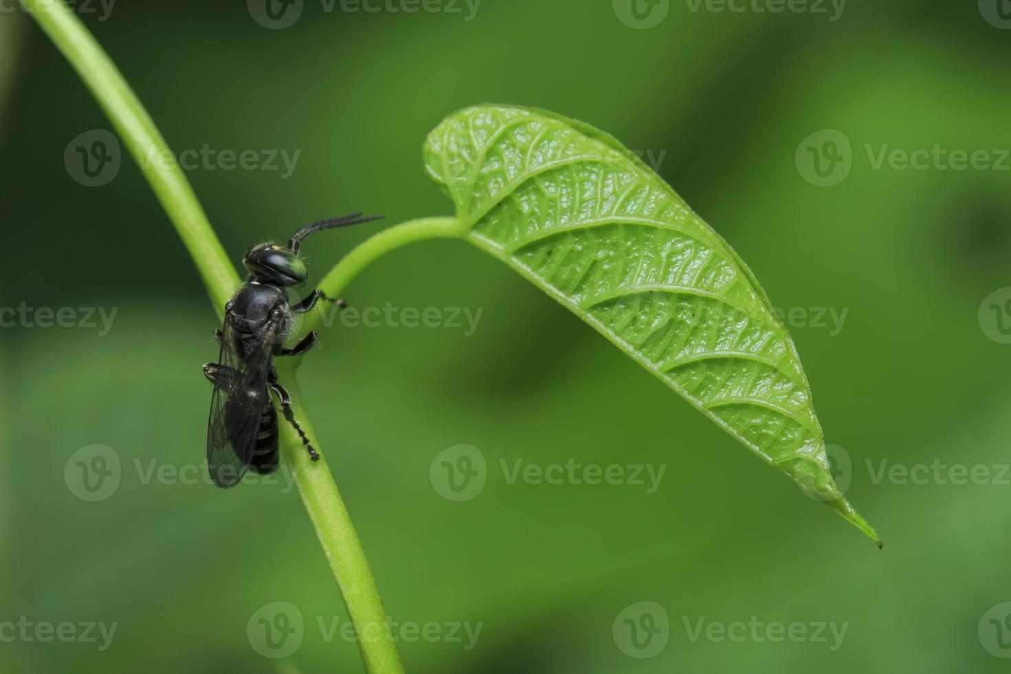 bug op een groen blad foto