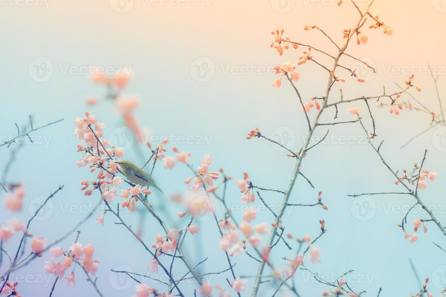 kersenbloesems met een vogel met witte ogen foto