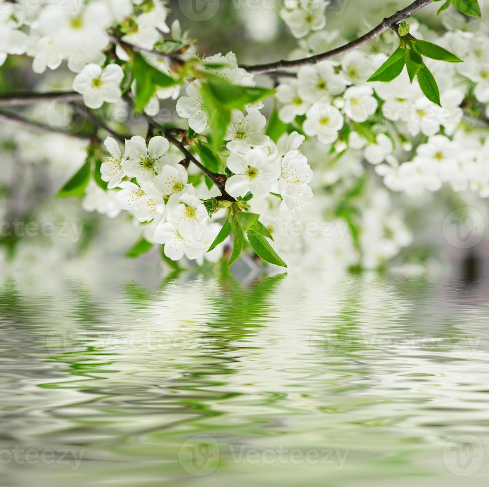 kersen bloemen foto