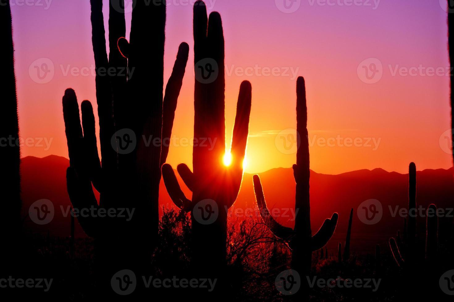 eerste zonsondergang in nationaal park saguaro in de buurt van tucson arizona. foto