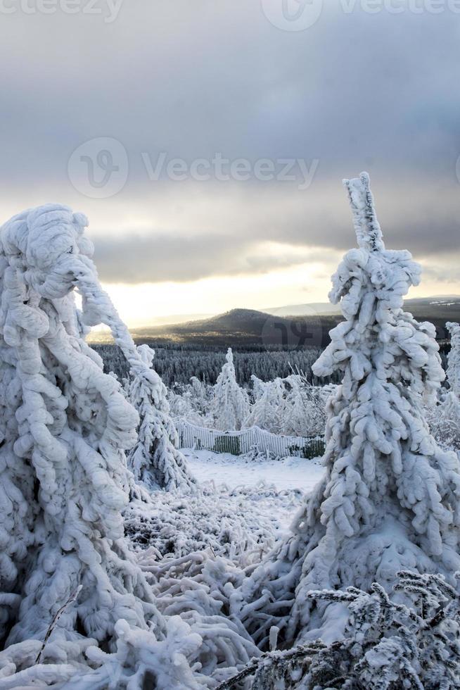 begin van de winter foto