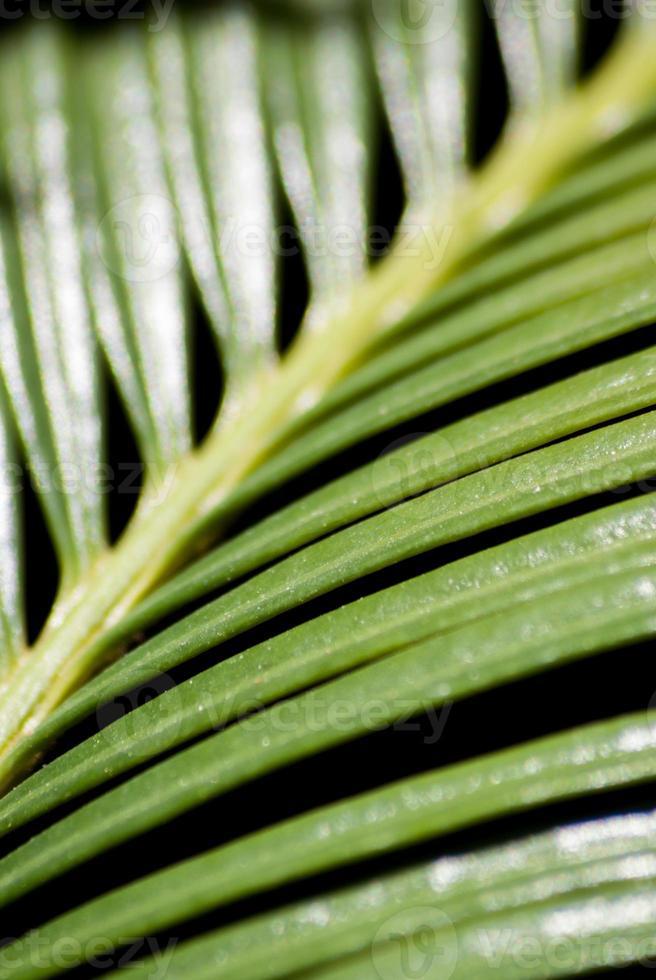 verde sobre negro foto