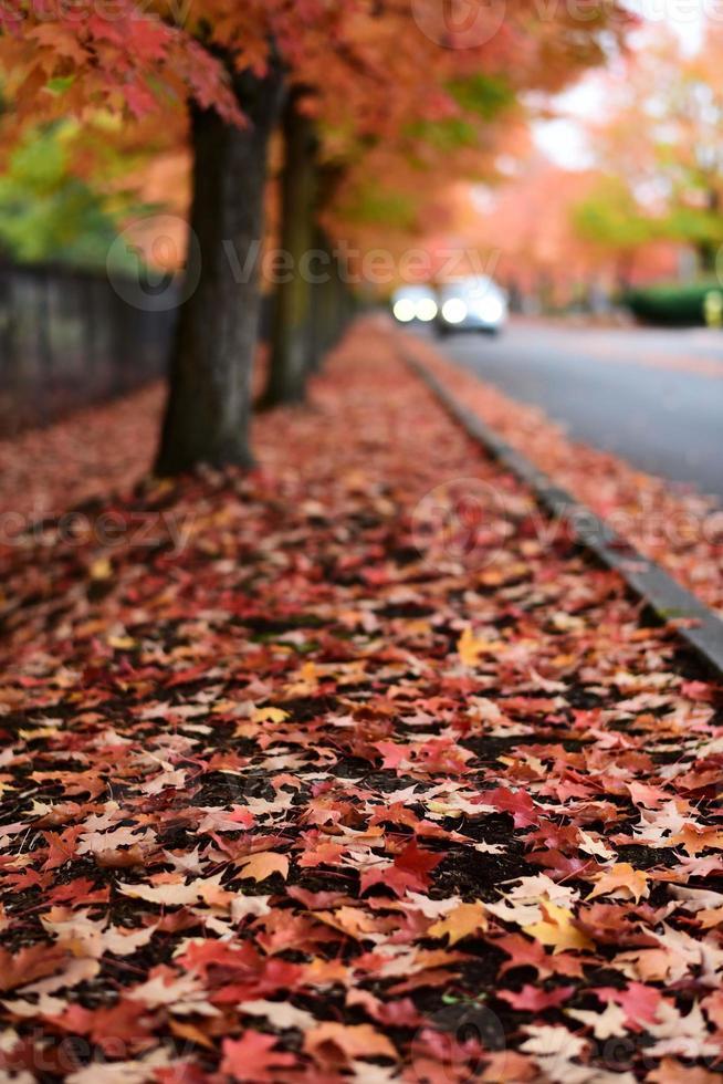 vallende bladeren foto
