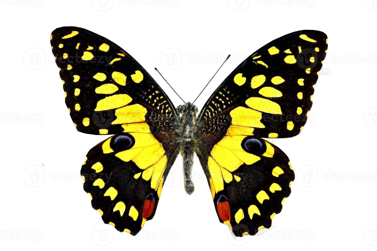 kleurrijke vlinder die op wit wordt geïsoleerd foto