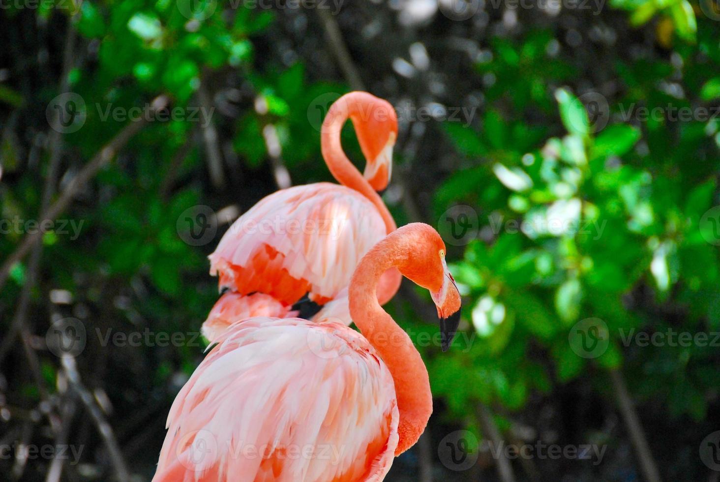 prachtige flamingo's op een paradijselijk strand foto
