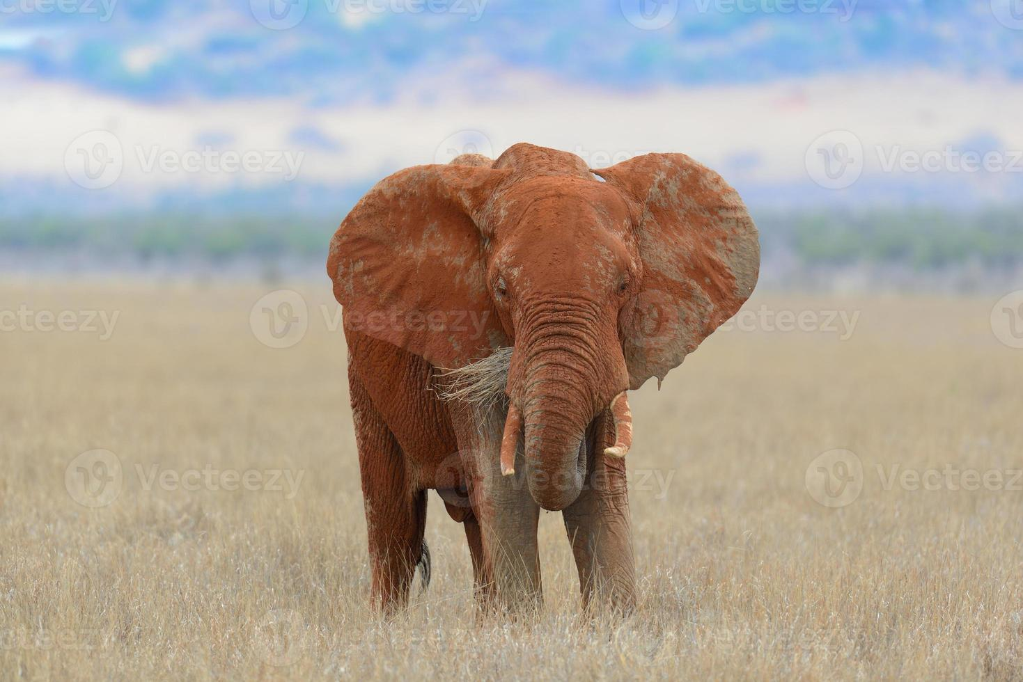 olifant in nationaal park van Kenia foto