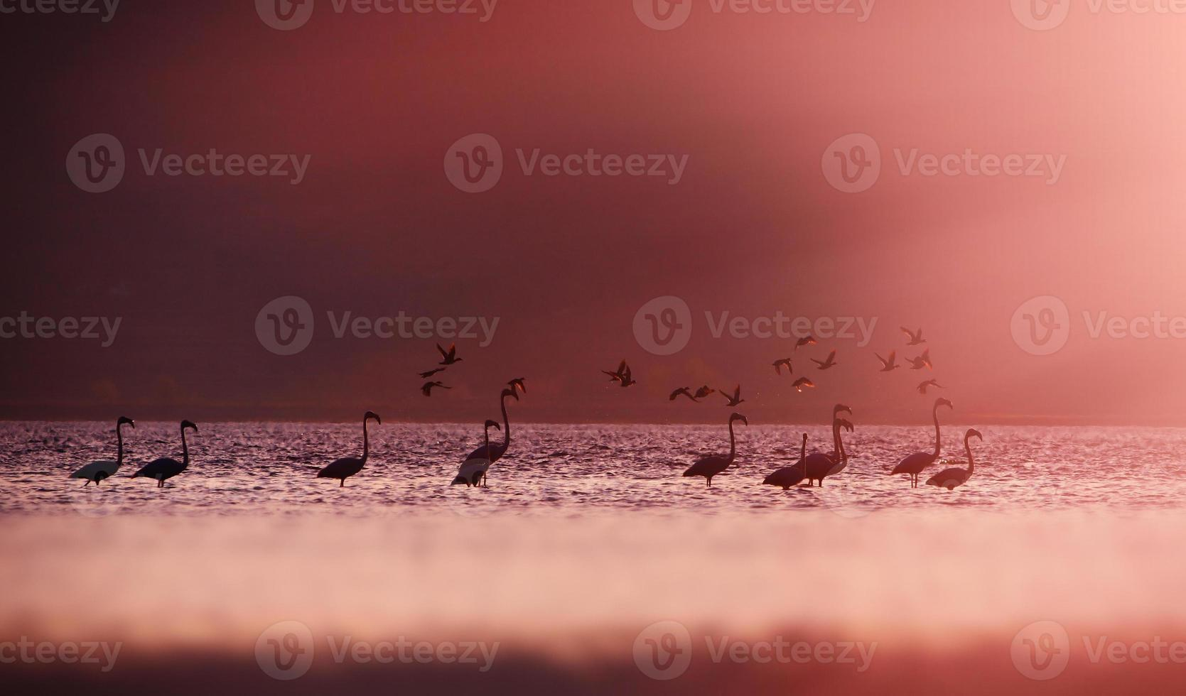 flamingo's in zonlicht. foto
