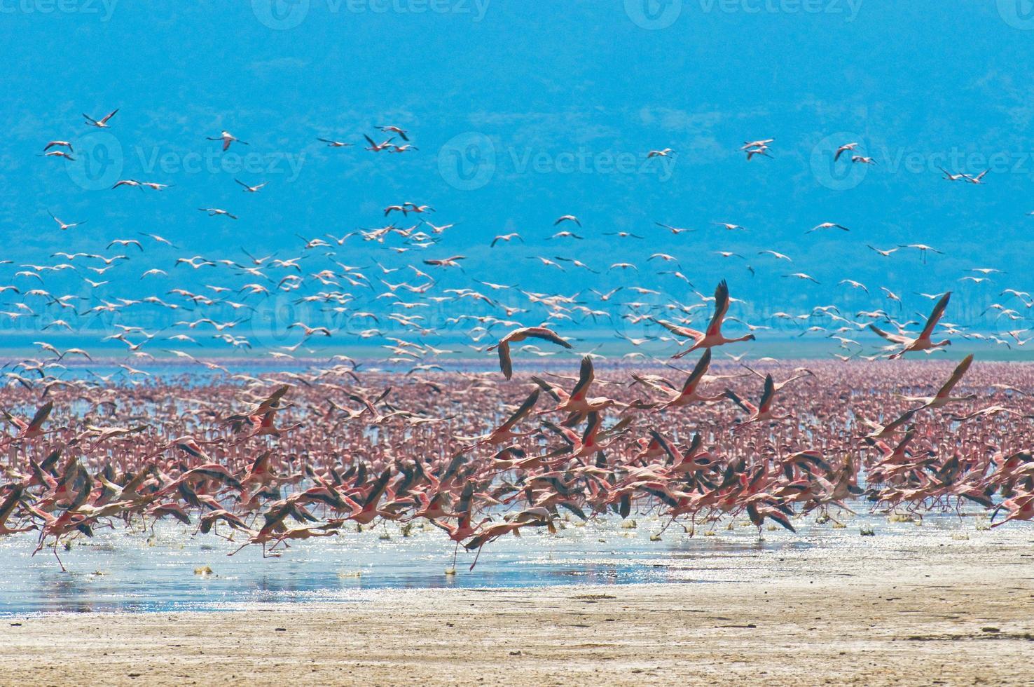 zwermen flamingo foto