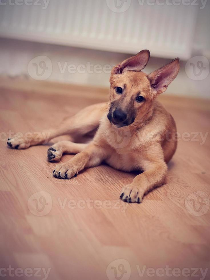 bastaard puppy. foto