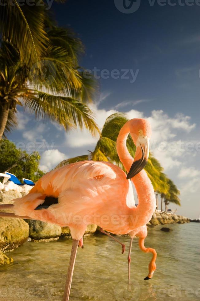 twee flamingo's die zich op een strand in Aruba bevinden foto