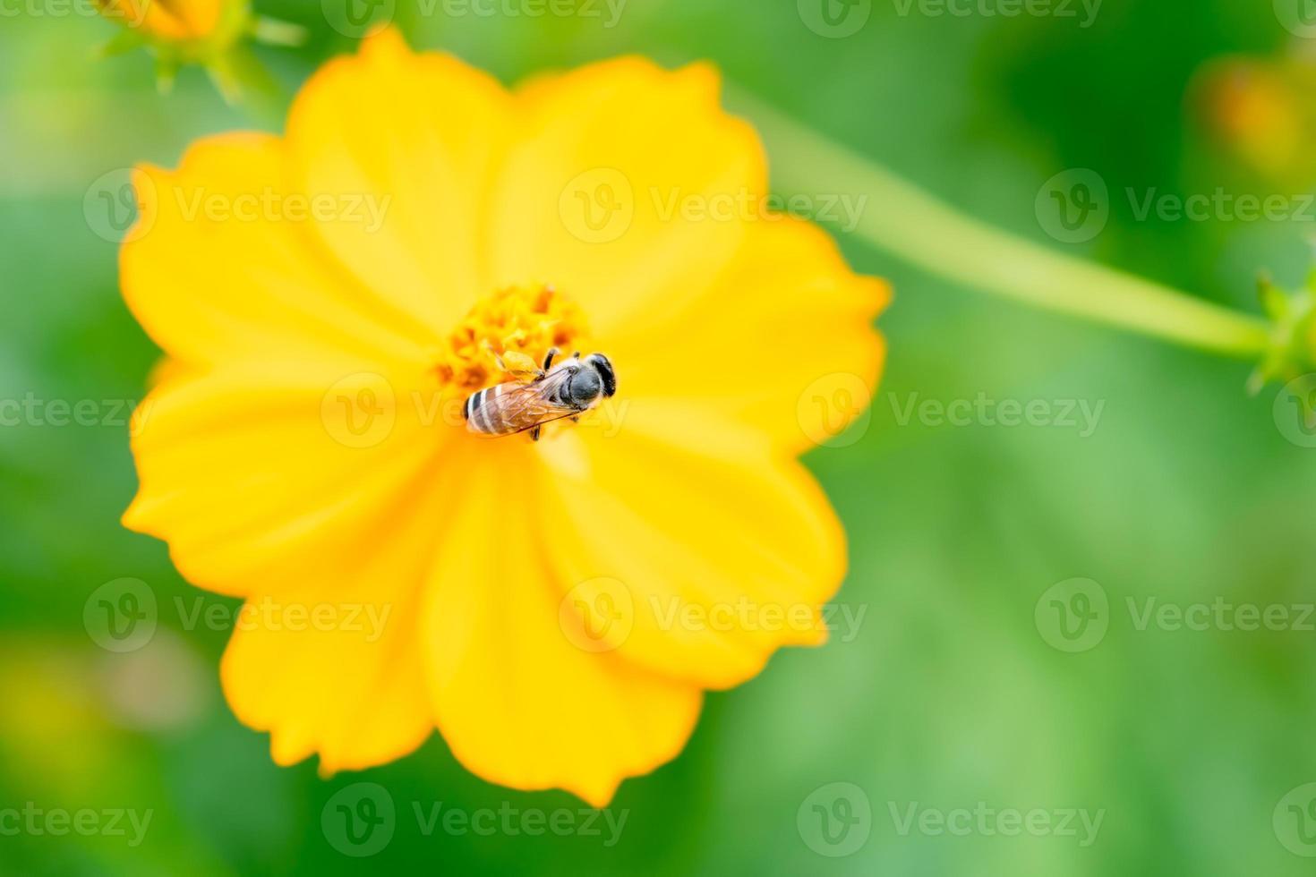 insect op een mooie bloem foto