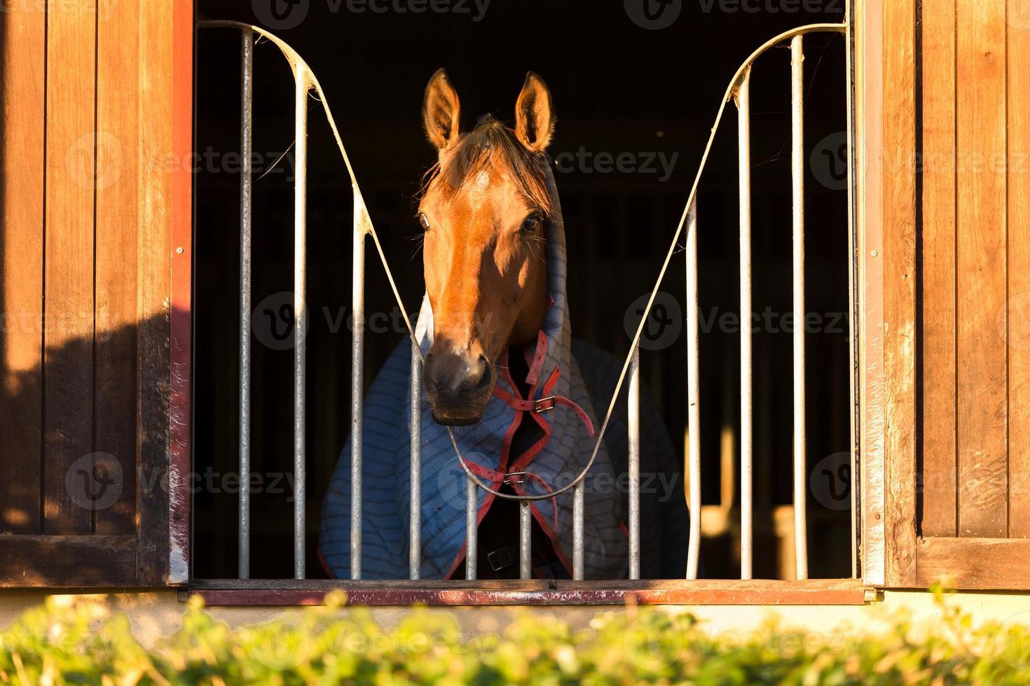 paard kijkt door het raam foto