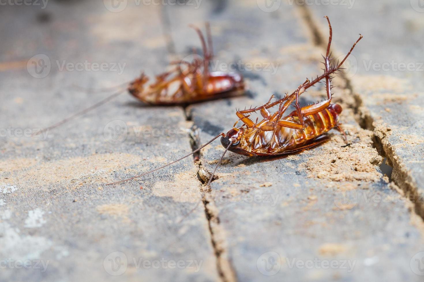 dood kakkerlak foto