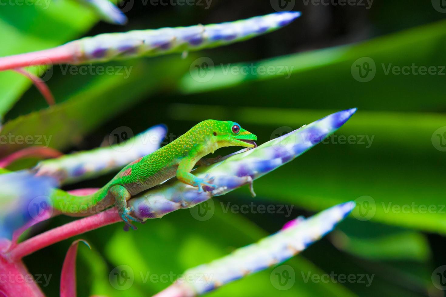 kleurrijke gekko foto