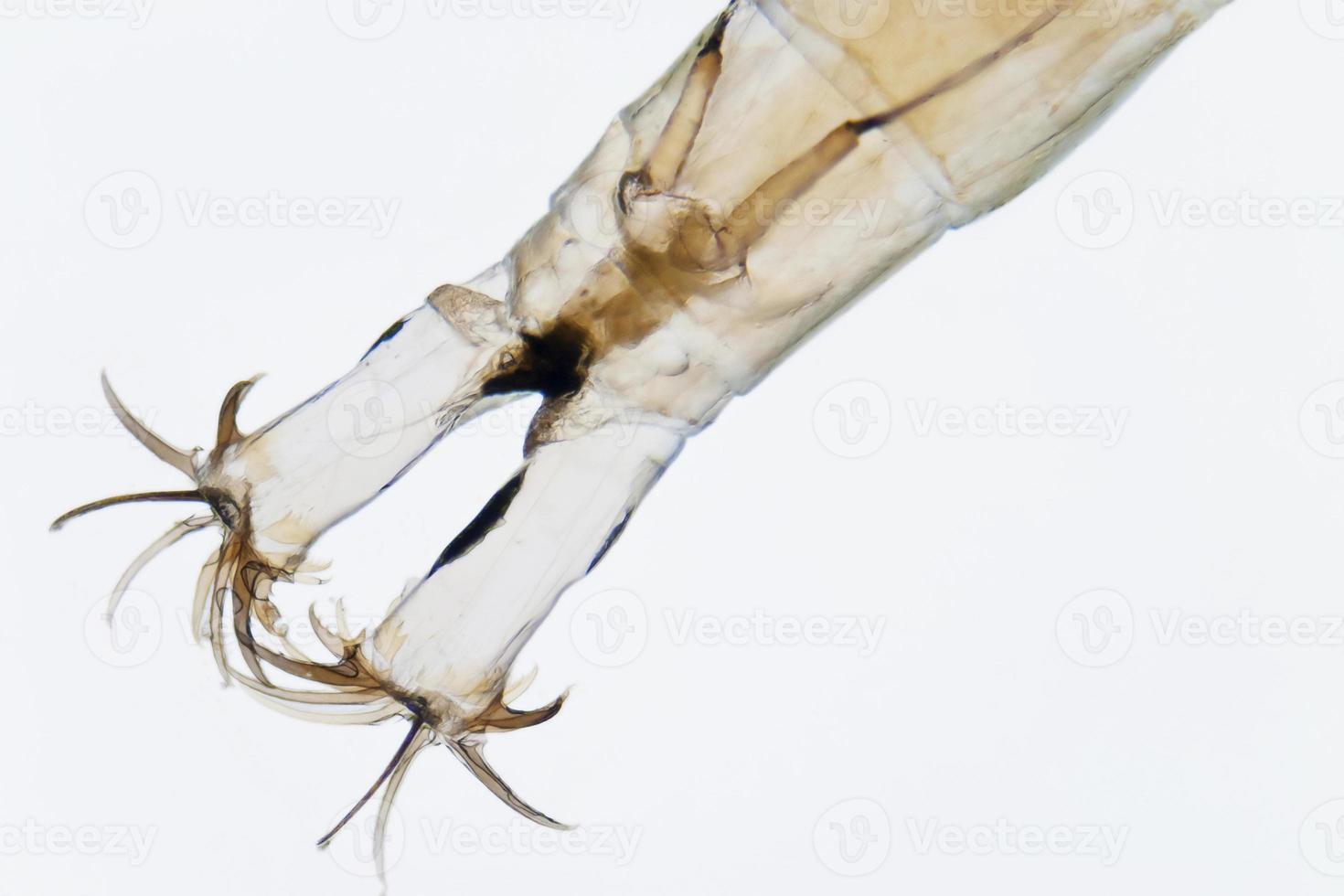 larve foto