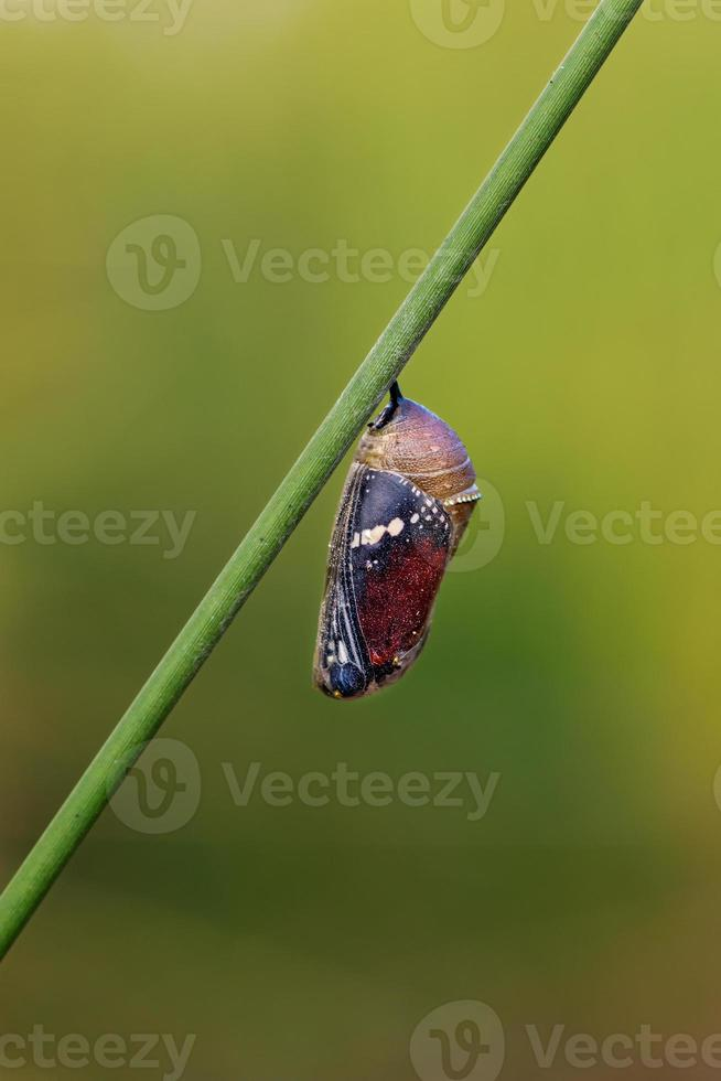 vlinder pop foto