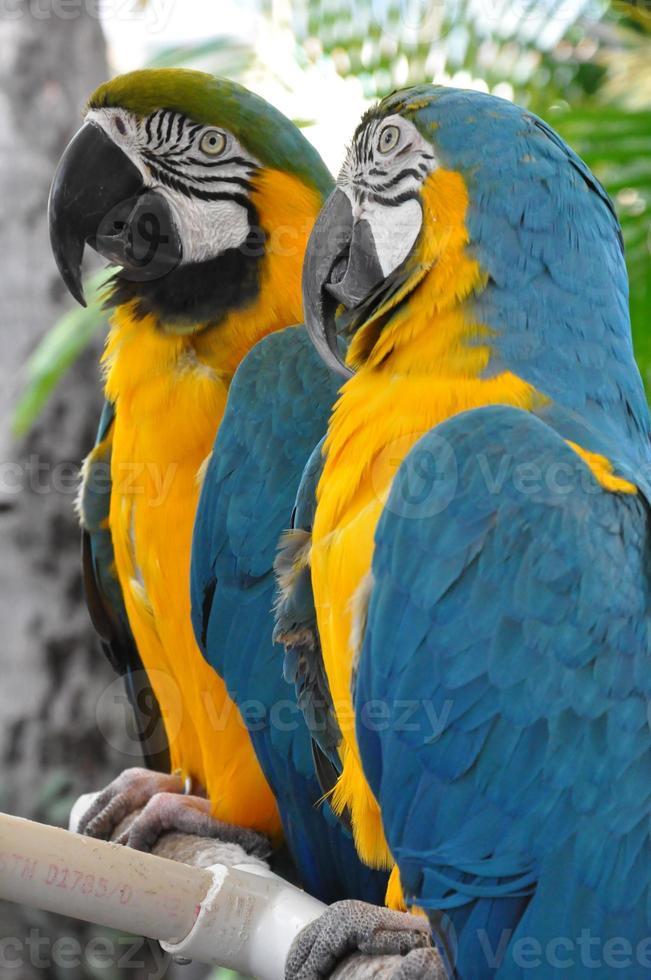 papegaai foto
