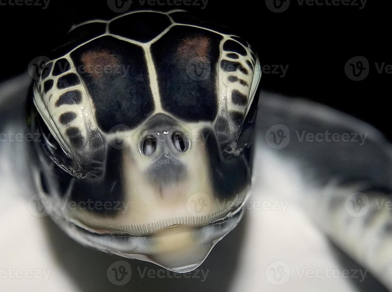 zeeschildpadden hoofd foto