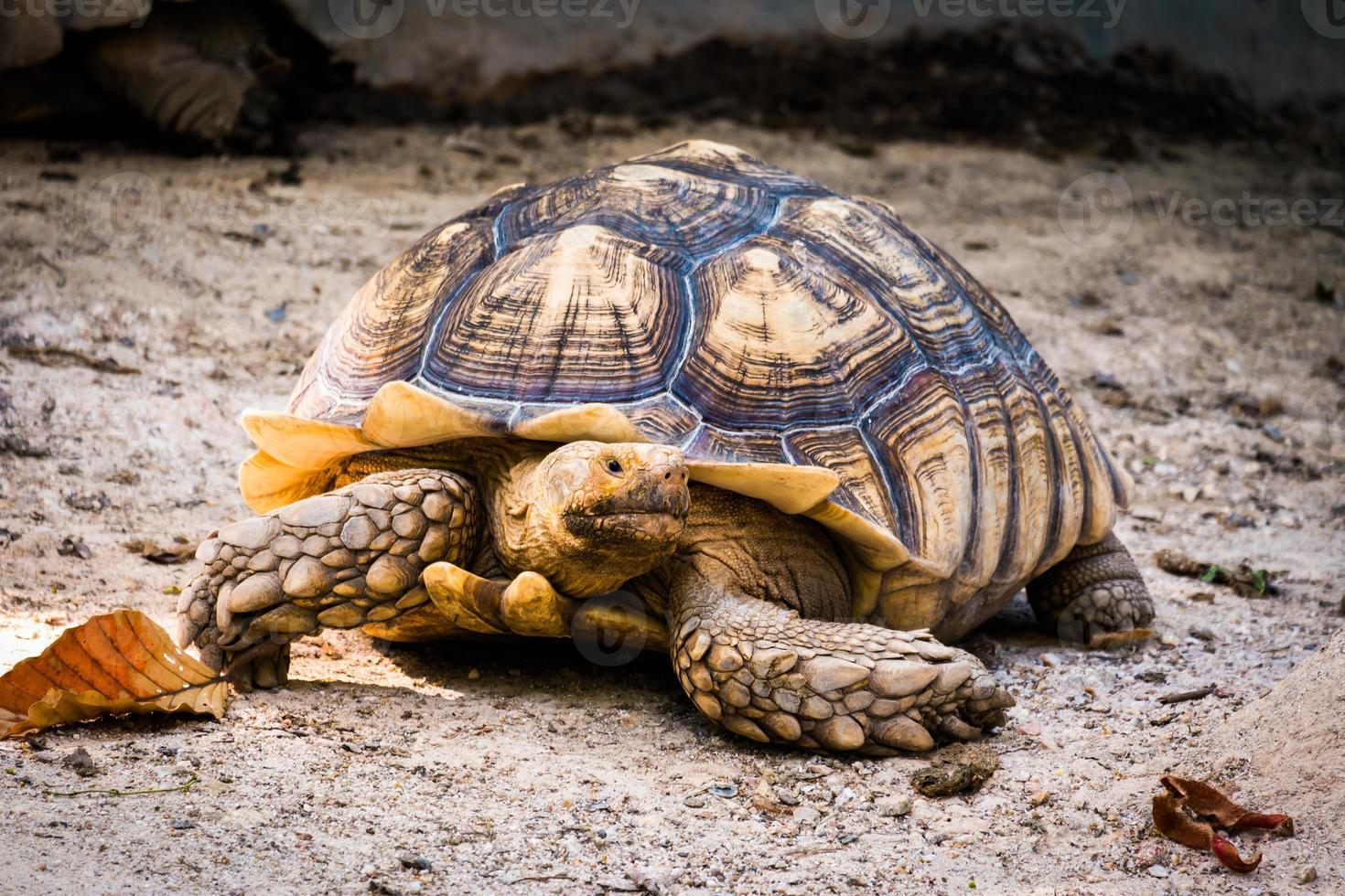 schildpad in de natuur foto