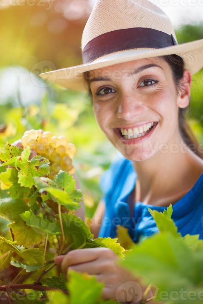 jonge vrouw oogsten van de druiven in de wijngaarden foto