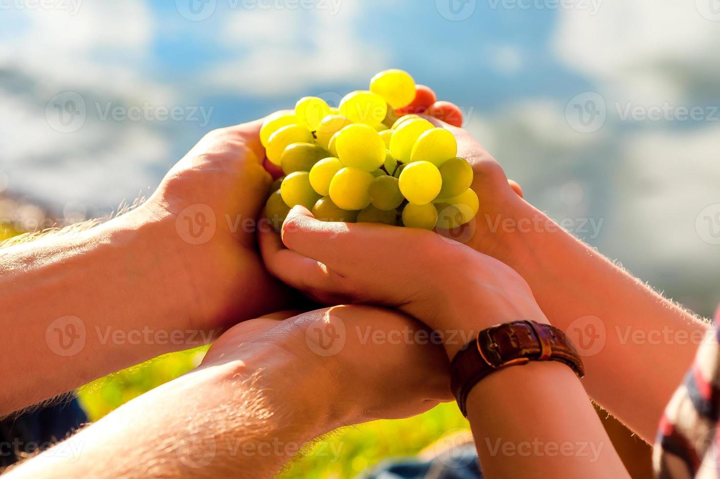 witte druiven in de hand, zonlicht foto