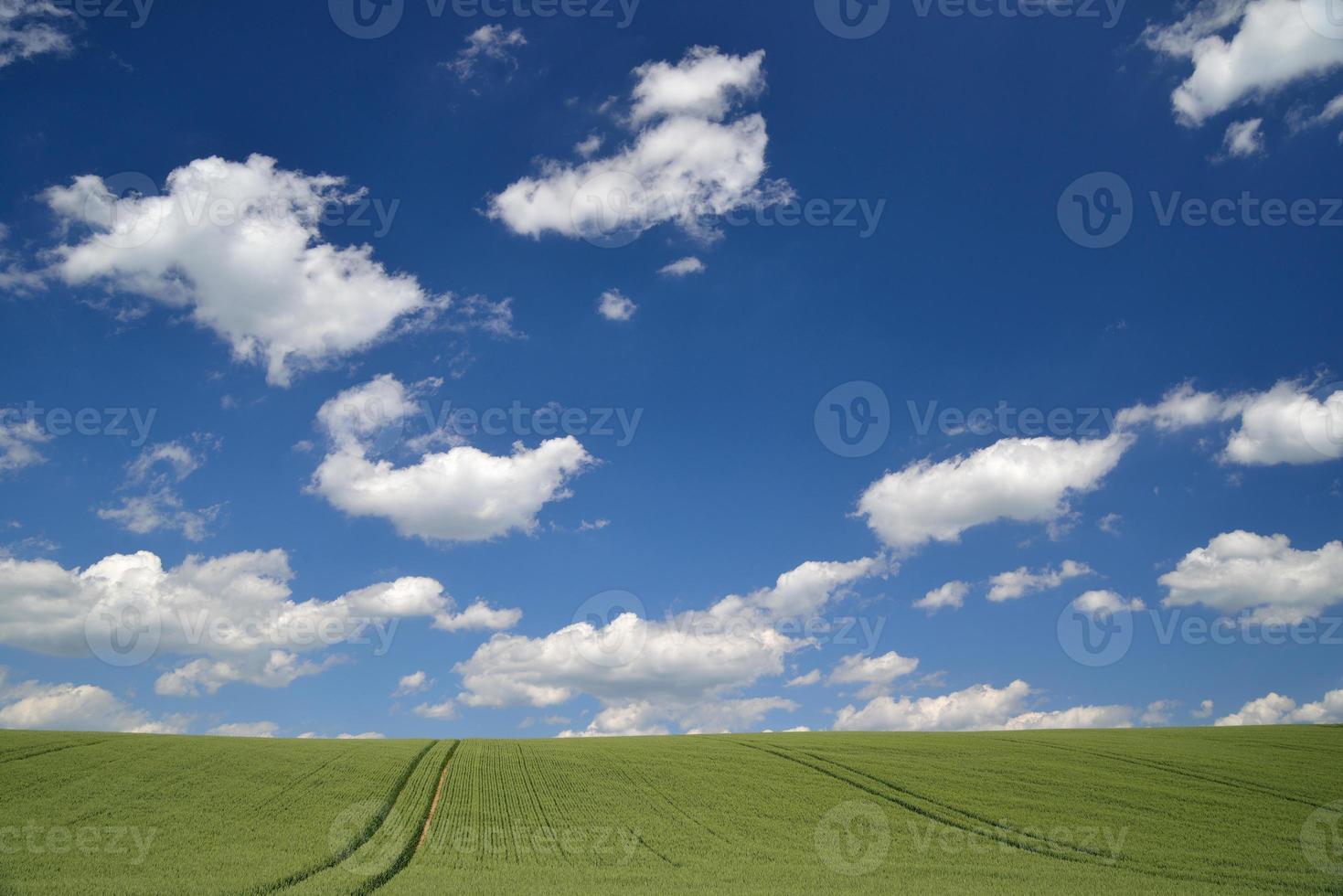 maïsveld foto