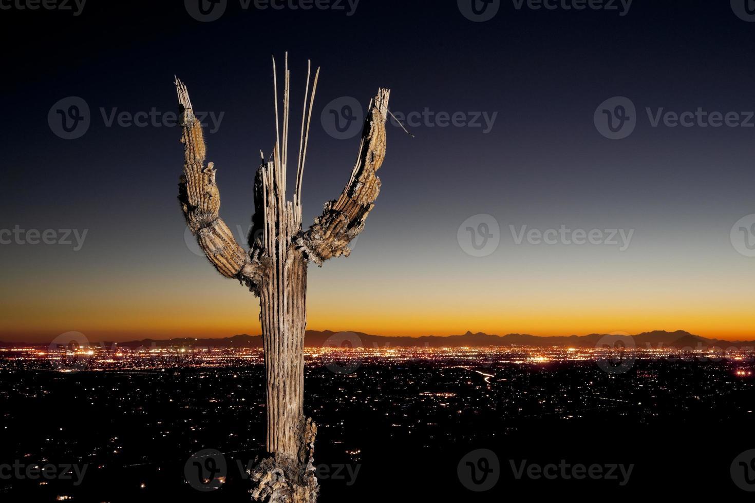 saguaro botten en tucson stadslichten foto