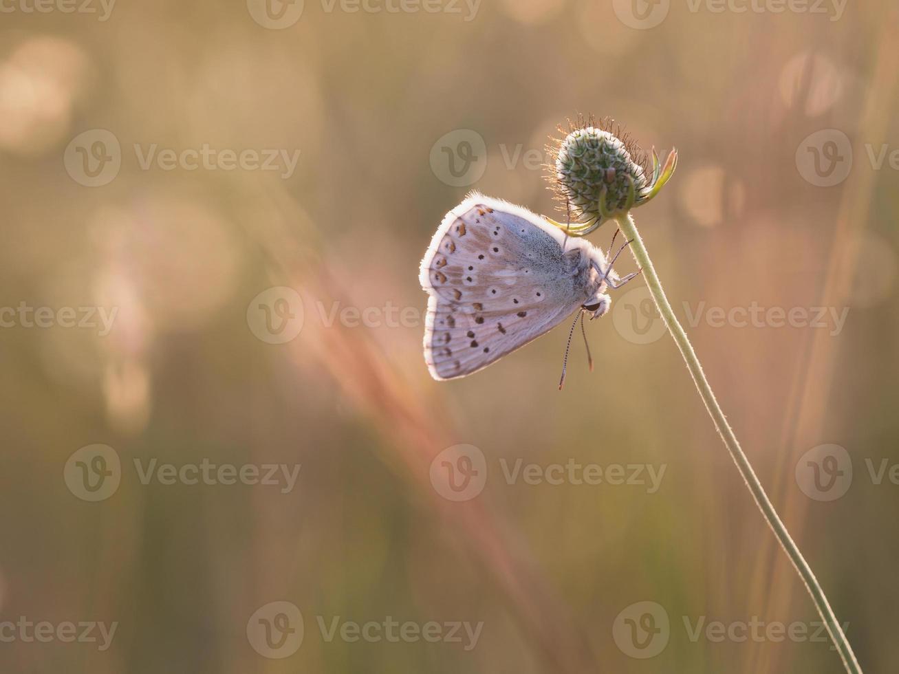 vlinder zomer foto