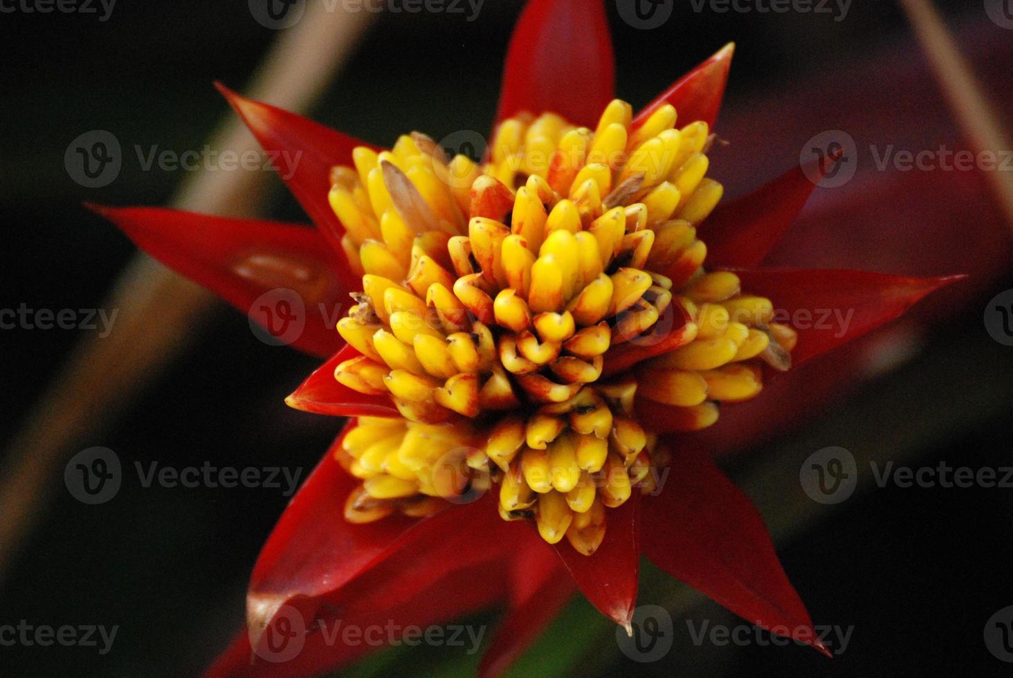wilde bloemen foto