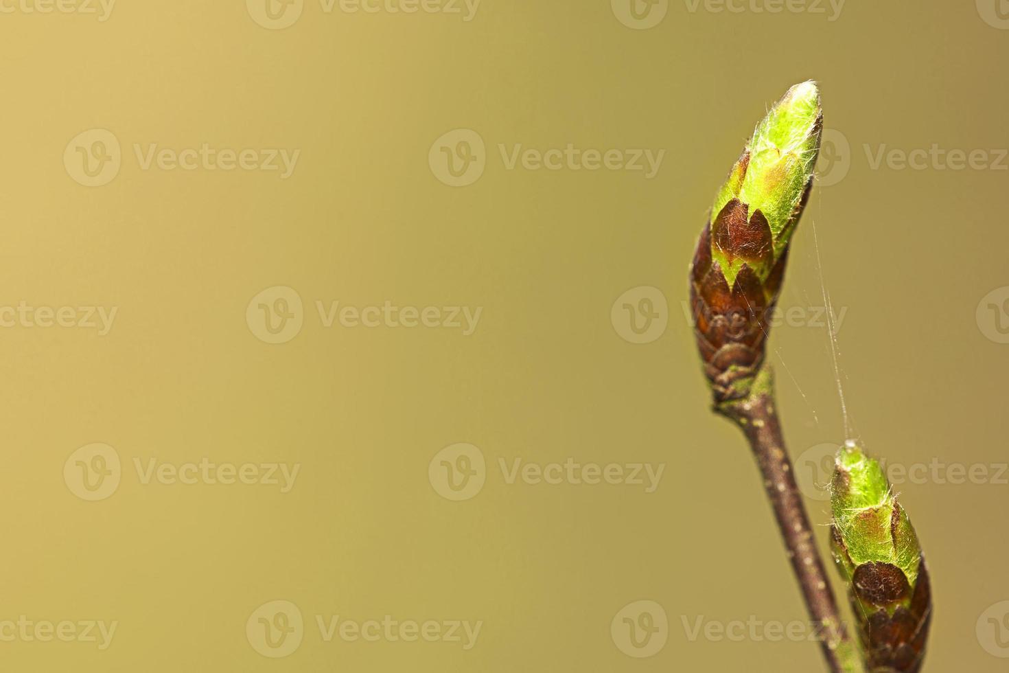 lente achtergrond foto