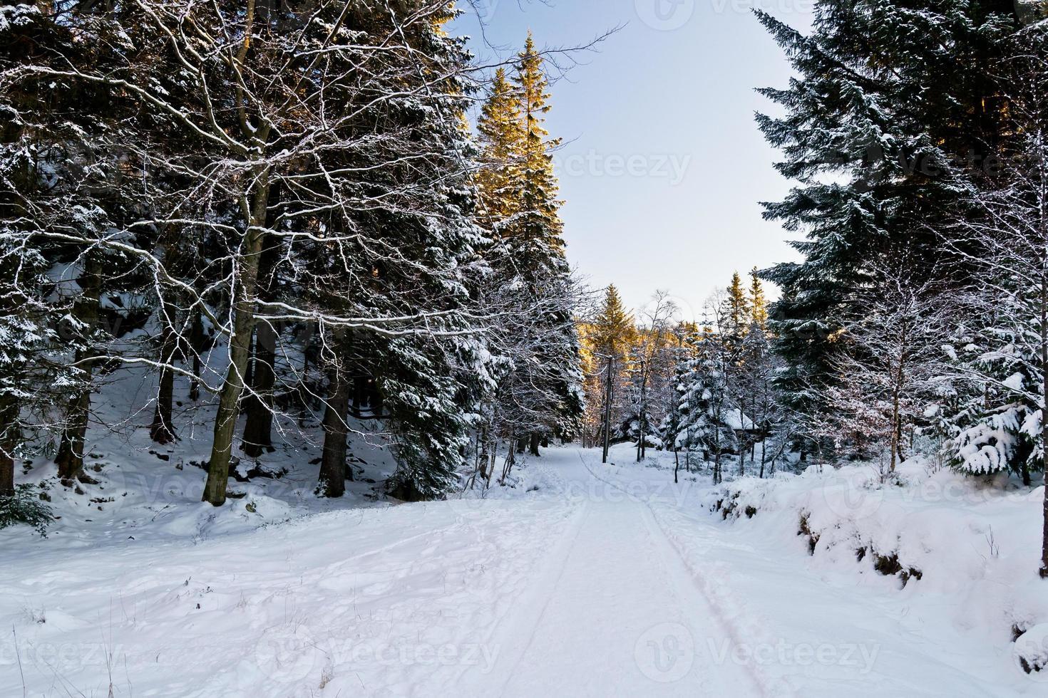 besneeuwde landschappen ii foto