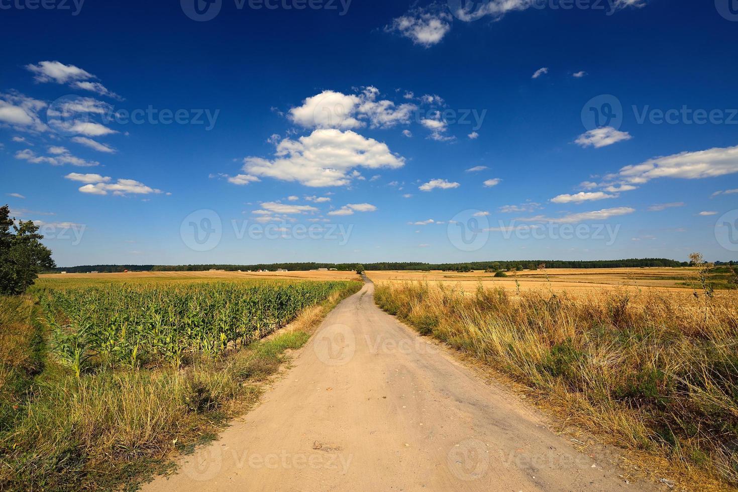 land landschap. veld. foto