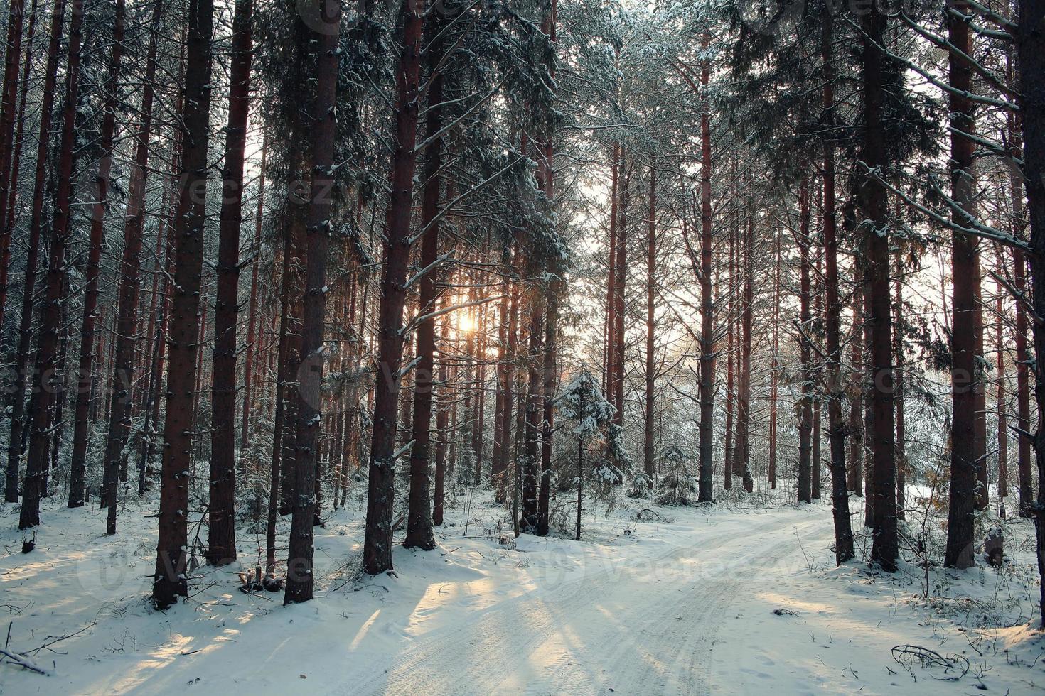 ijzig winterlandschap in besneeuwde bossen foto