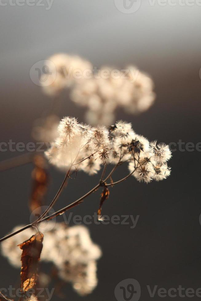 wilde bloemen in de winter foto