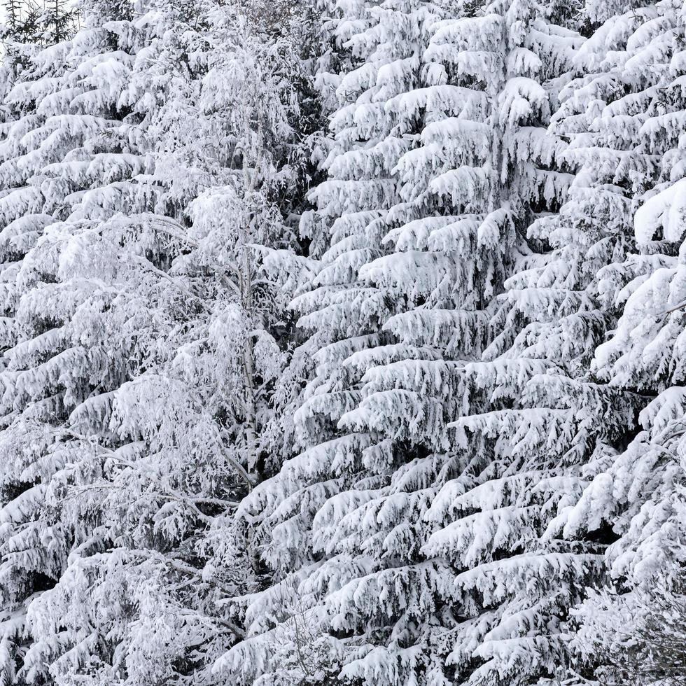 winter sparren foto