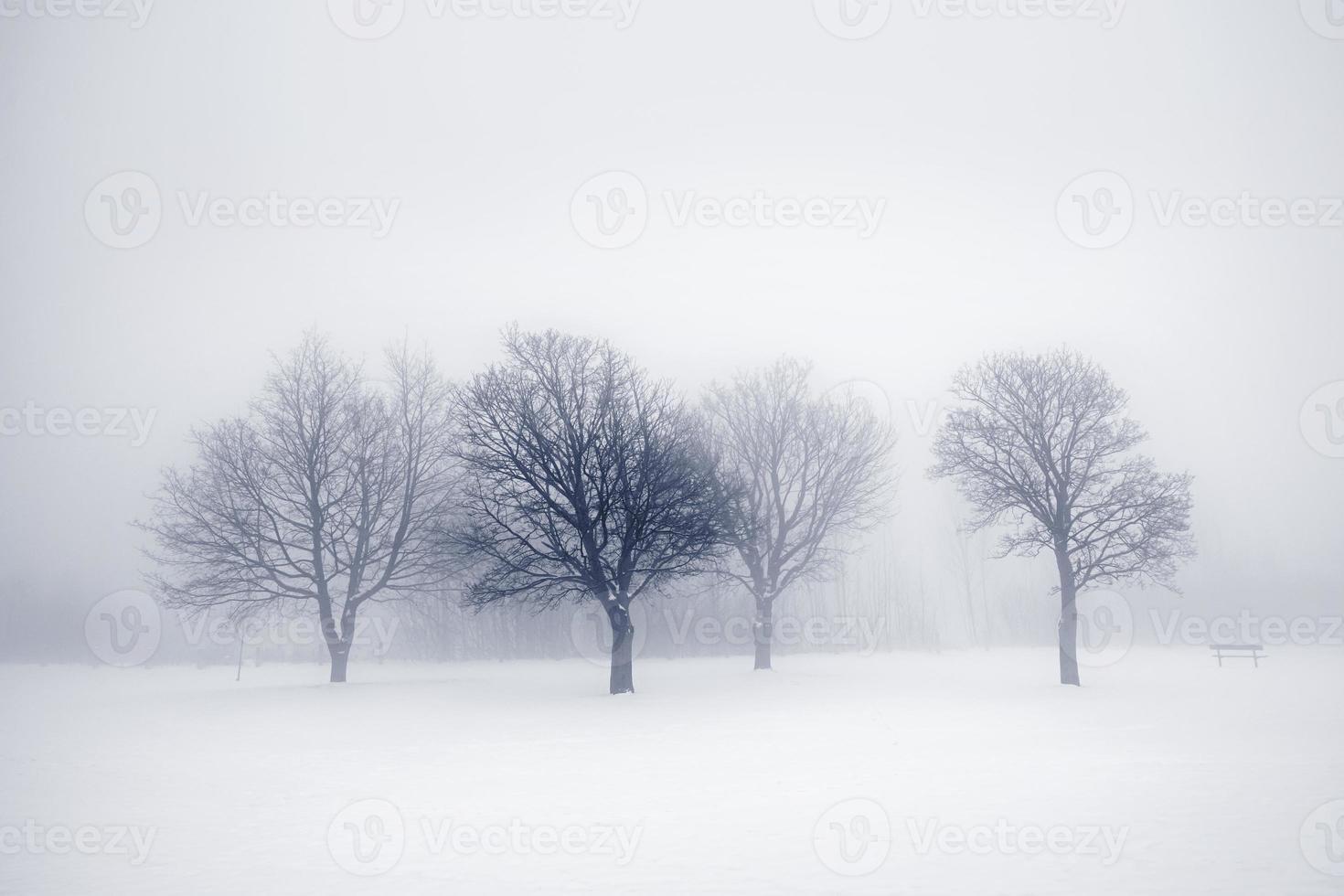 winter bomen in de mist foto