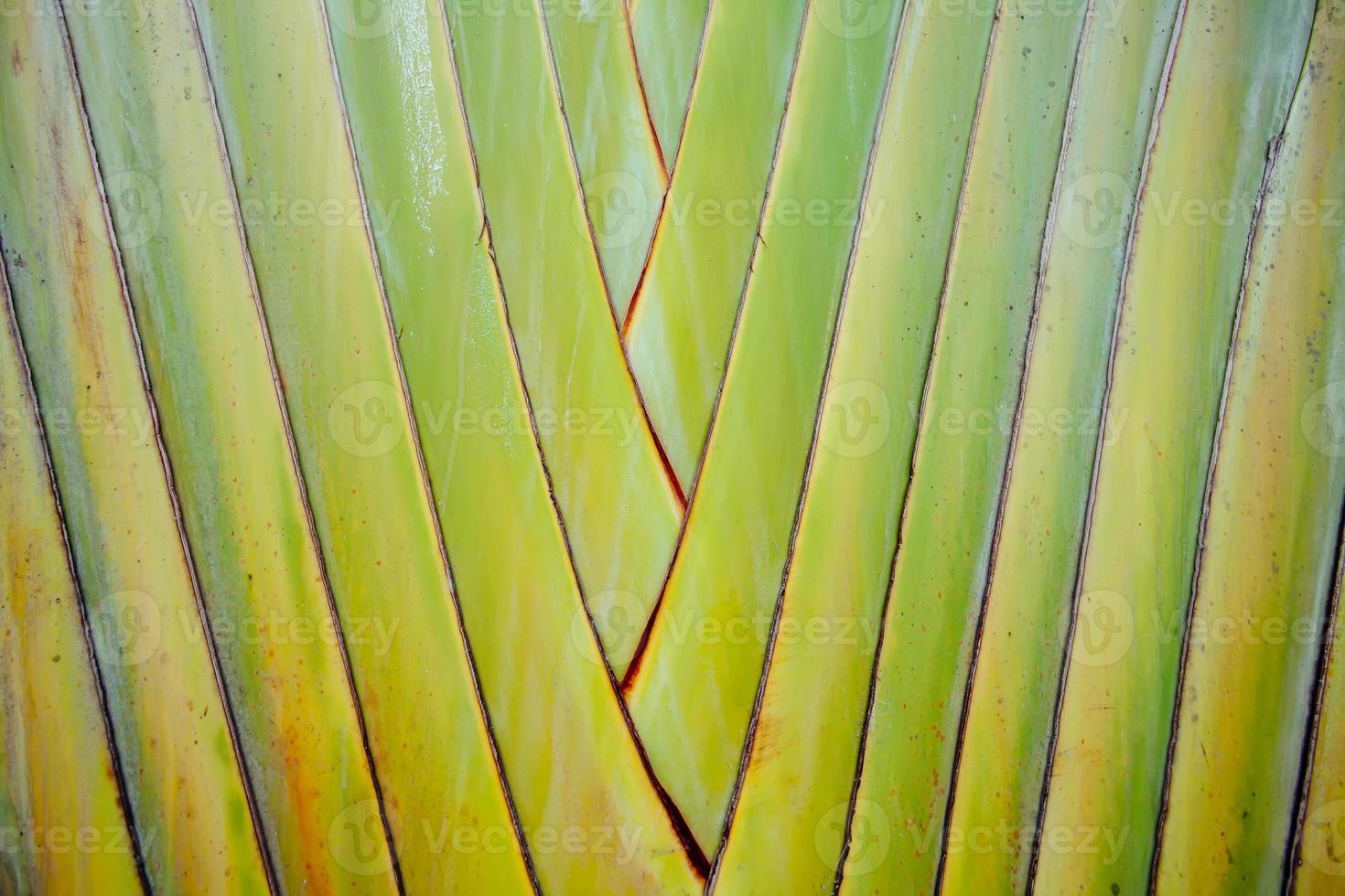 patroon van stengels palm uitgelijnd in rijen foto