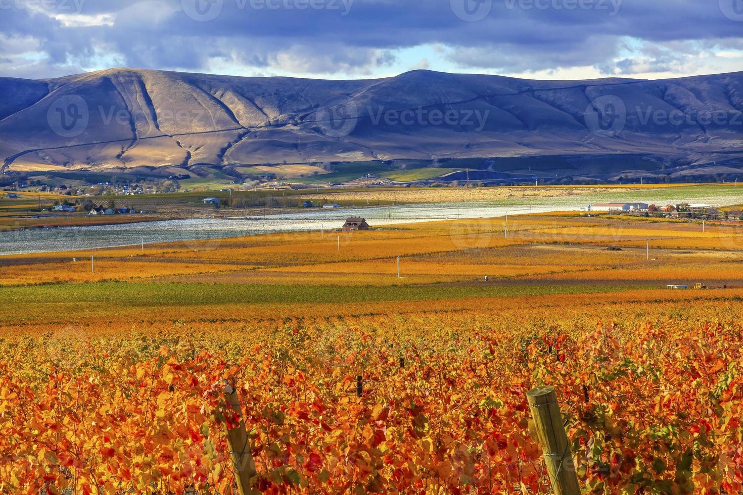 oranje bladeren druiven vallen wijngaarden Red Mountain Benton City Washington foto