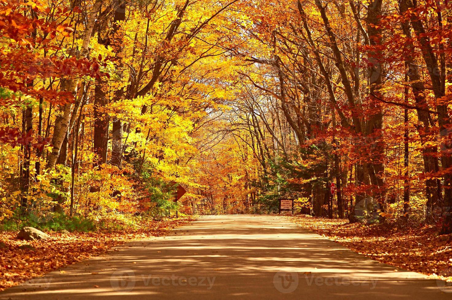 herfst scène met weg foto