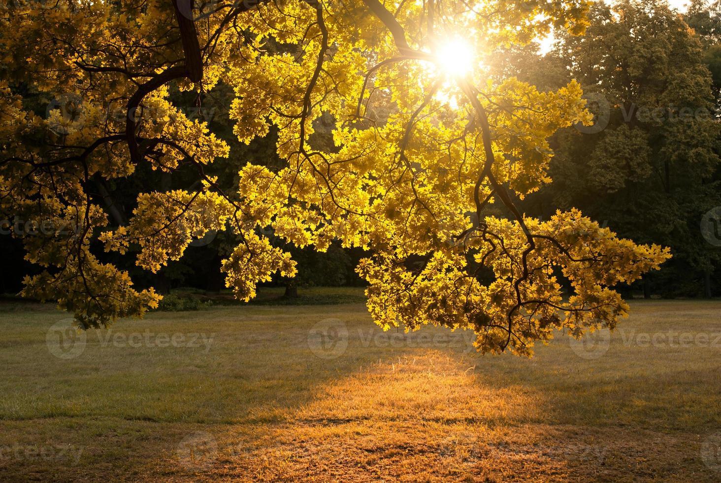 herfst park foto