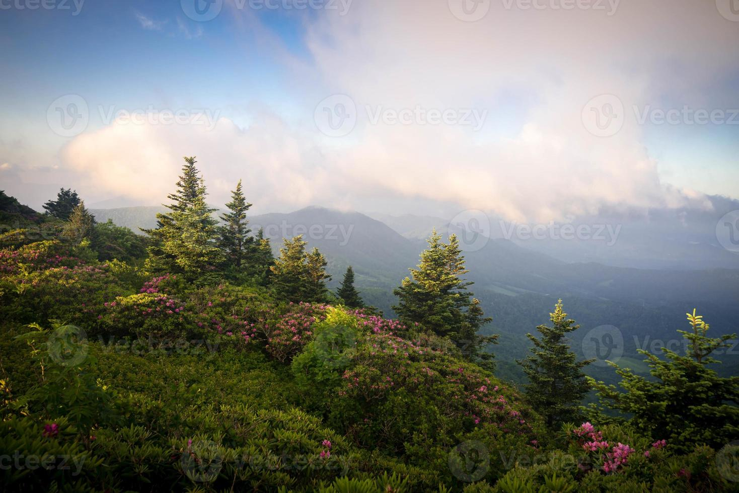 Roan Mountain Spring Rhododenron bloeit 10 foto
