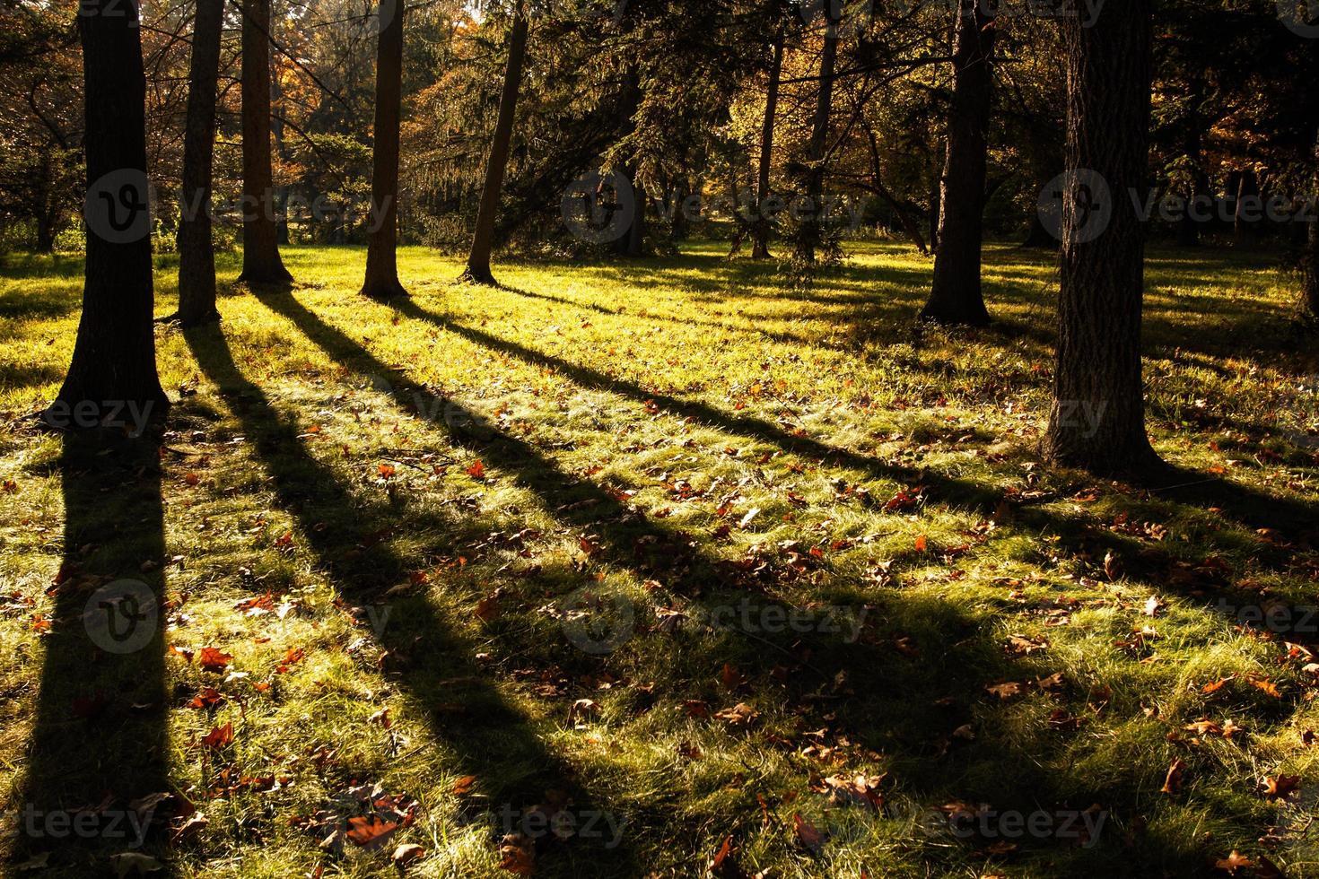 visueel van de natuur, het morton arboretum lisle il usa foto