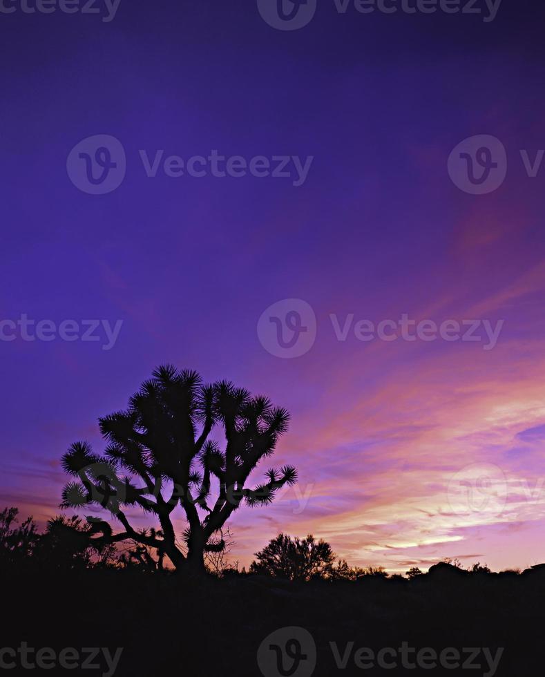 Joshua Tree zonsondergang foto