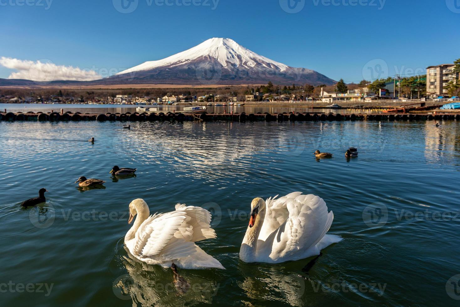zwaan en fuji foto