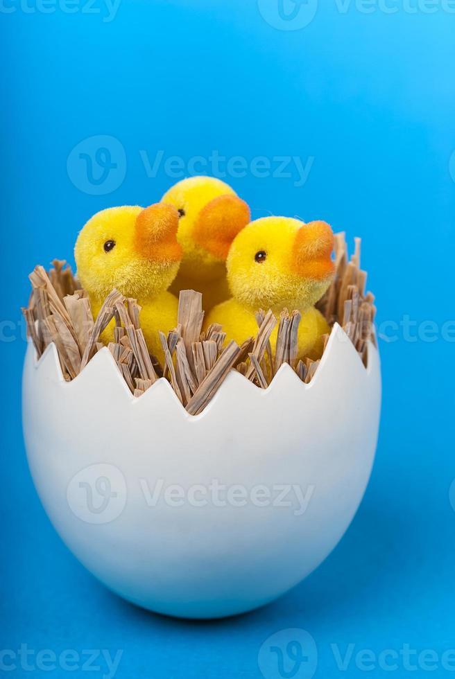 Pasen-eendjes in eishell op blauwe verticaal als achtergrond foto