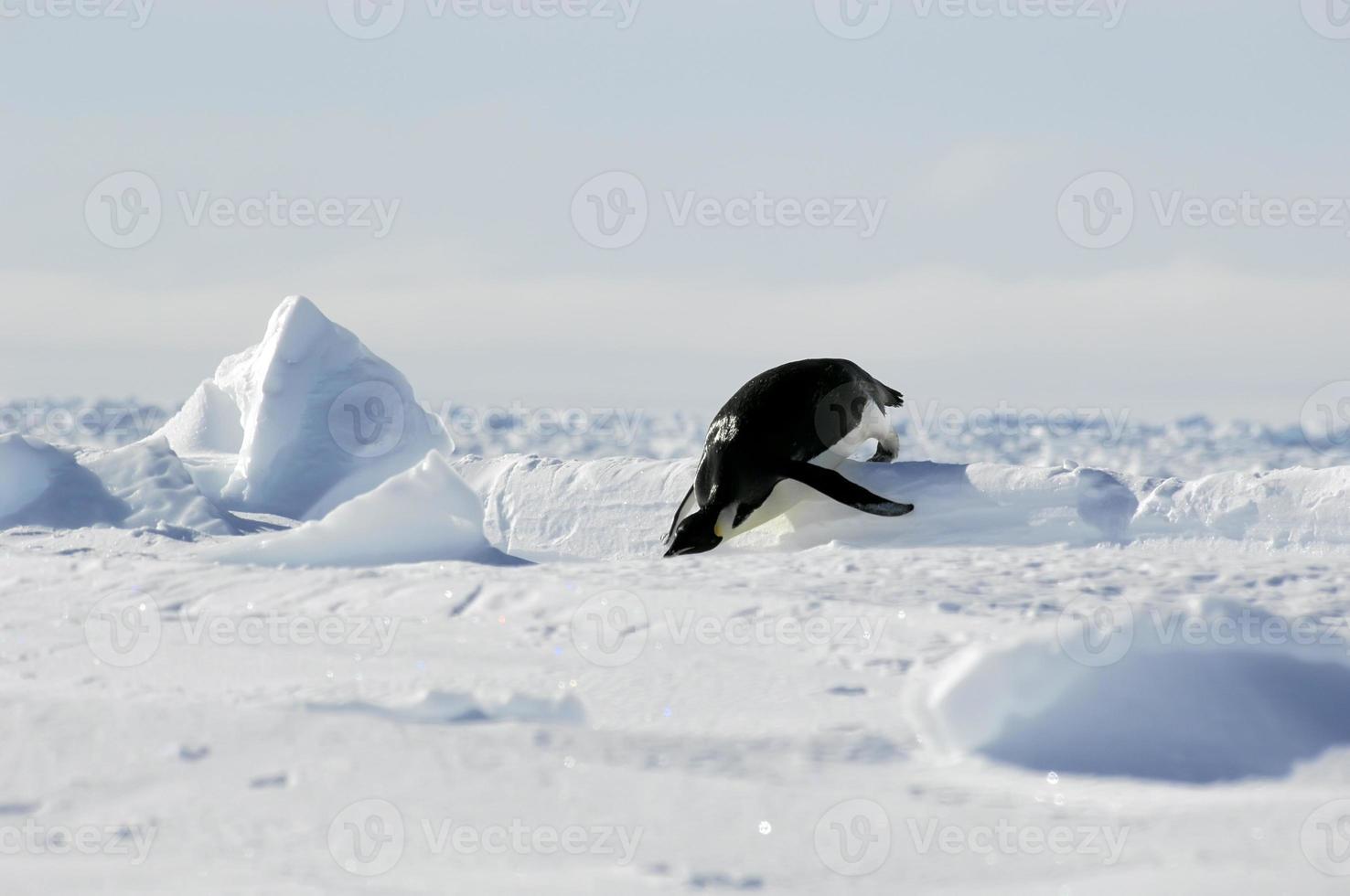 pinguïn olympische spelen foto