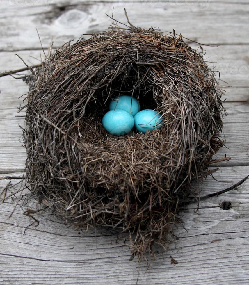 robin's eieren in een nest foto