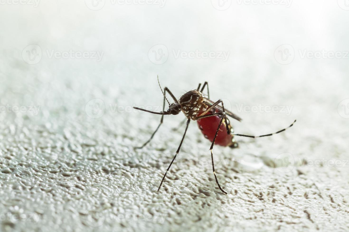 muggen zuigen foto
