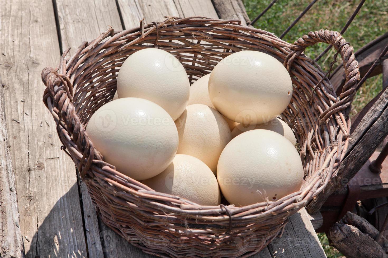 struisvogel eieren foto