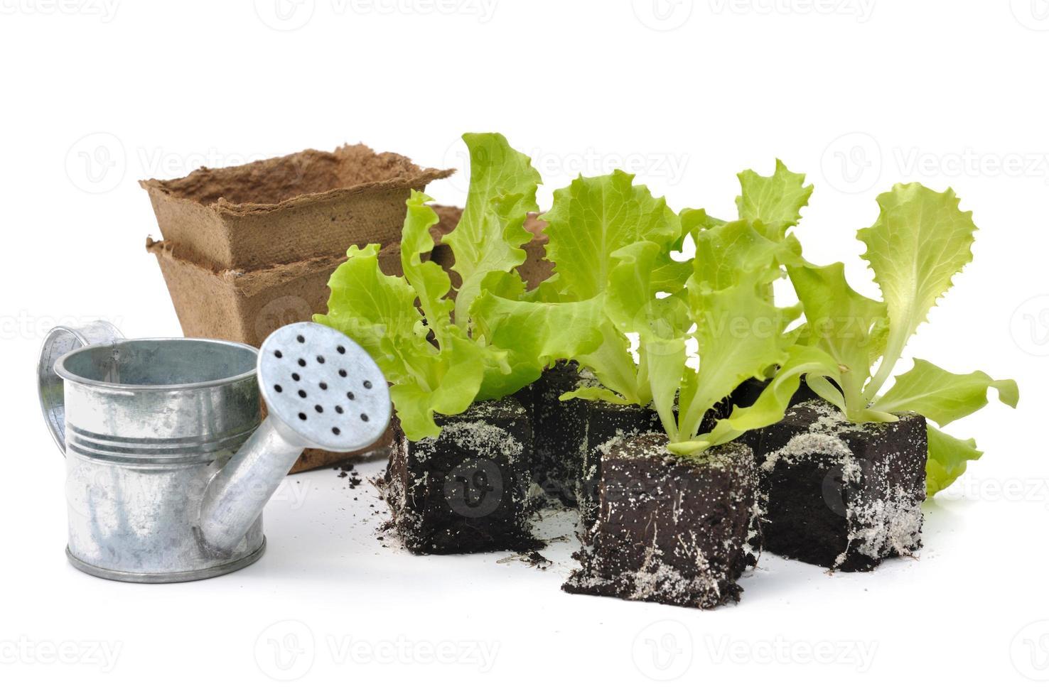 salade schiet foto